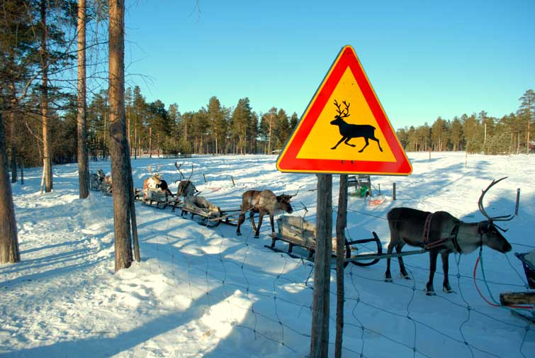 10 Reasons You Should be Planning Your Lapland Adventure Now