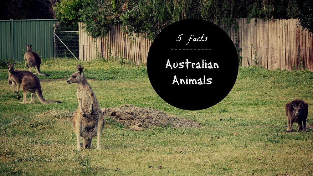 5 Weird Facts You Didn't Know about Australian Animals