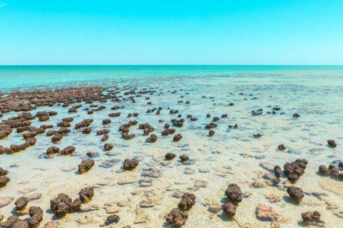 stromatolites in Western Australia