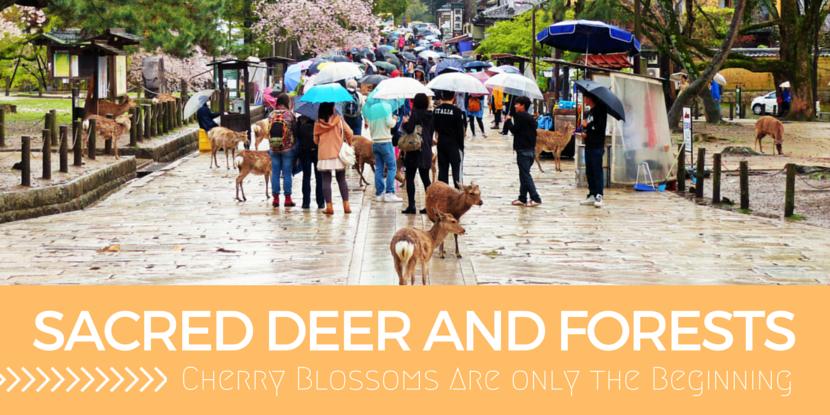 The Cute Nara Deer Are Quite Dangerous!