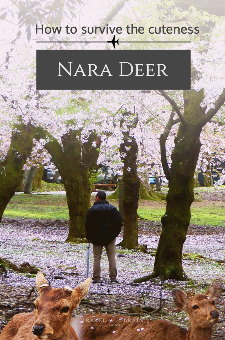 How to Survive the Cuteness of the Nara Deer