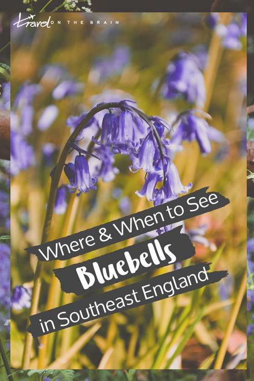 Where and When to See the Bluebells in London and Surrounds