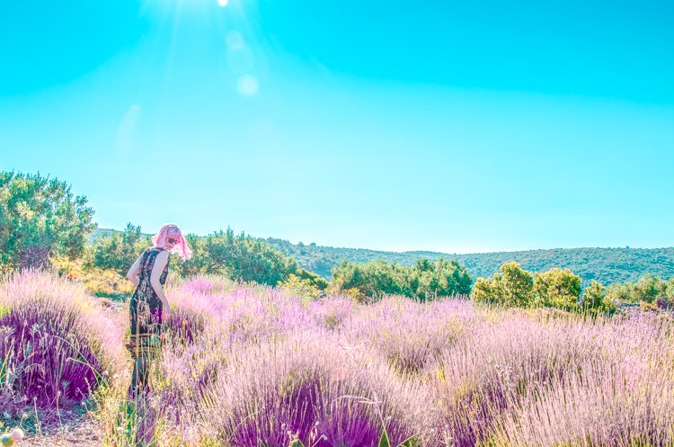 How to (Not) Visit the Hvar Lavender Fields – A Guide