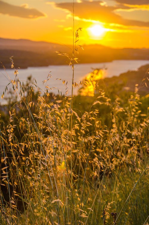 Sunset in Croatia - from Sibenik castle - grass in golden light
