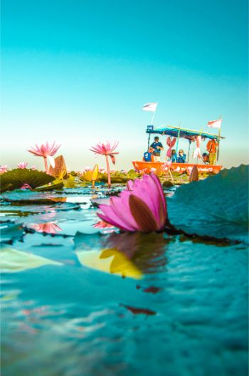 How to See the Red Lotus Lake in Udon Thani – Mini Guide