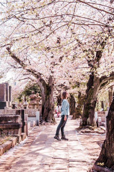 Yanaka Cemetery in Tokyo during spring