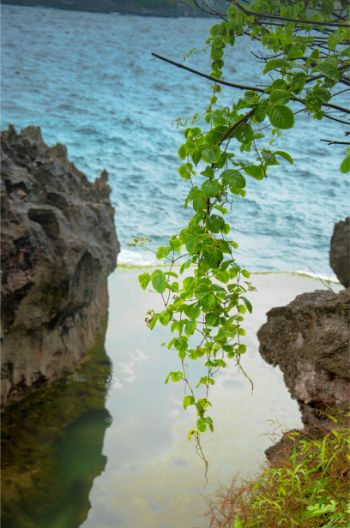 vine hanging voer ANgels Billabong on Nusa Penida