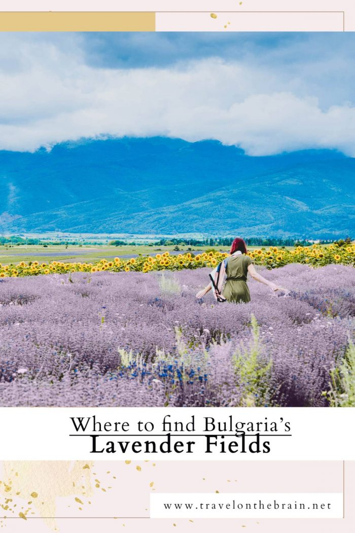 Where to Find Epic Lavender Fields in Bulgaria