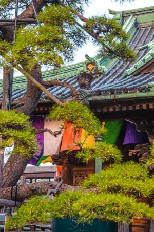 trees and colourful details at Shibamata Taishakuten in Tokyo