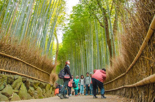 Bamboo Forest Walk Kyoto
