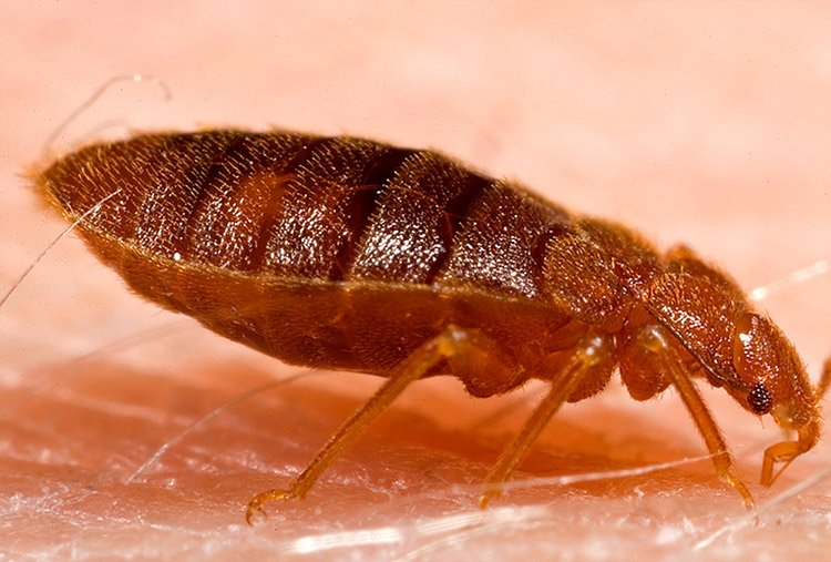 Living Nightmare – Bedbugs at Hostels & How to Deal