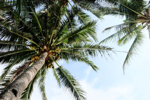 palm trees on a tropical beach - manila day trips