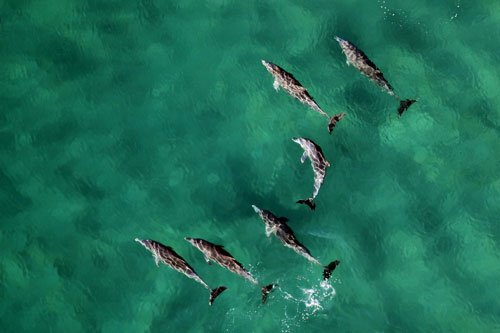 pod of dolphins in tropical waters