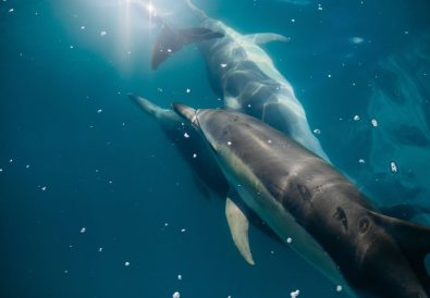 Why I Didn't Join a Lovina Dolphin Tour - Lovina Beach