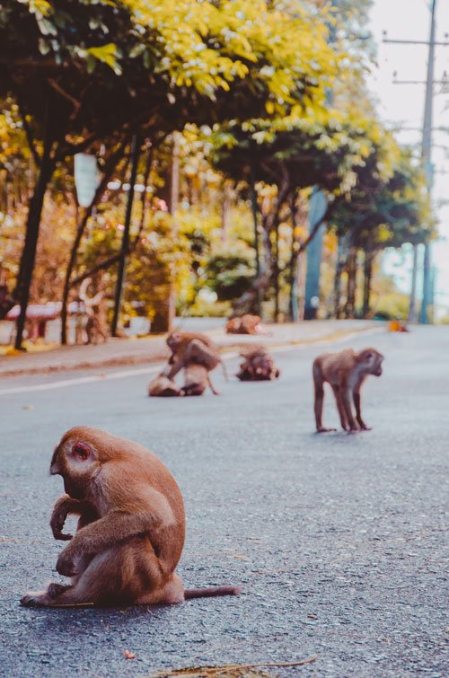 Monkey Hill in Phuket Town