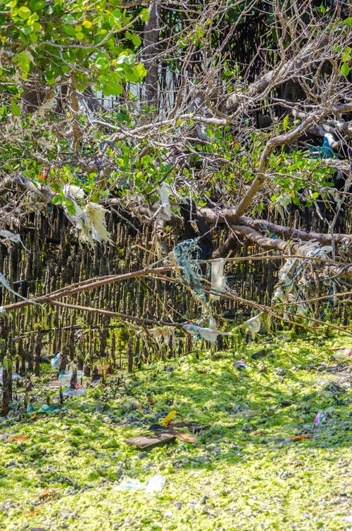 West Bali West Bali National Park mangroves with trash