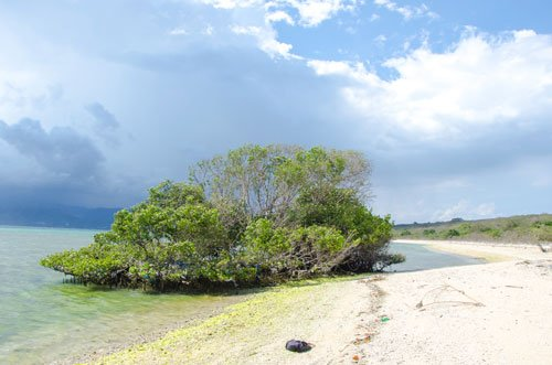 West Bali National Park Prabat Agung Beach with mangroves