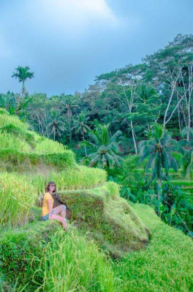 Tegalalang Rice Terraces at sunset
