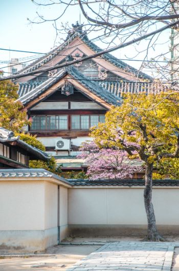 House on Tennoji Temple complex with cherry blossoms, Osaka, Japan