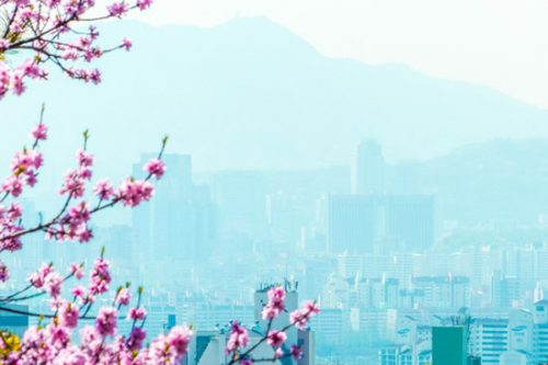 Seoul South Korea spring cherry blossoms seen from Namsan hill