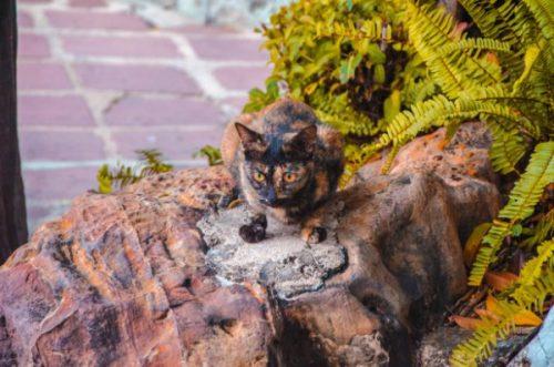 cute cat in Thailand