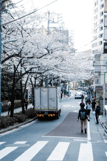 Tokyo Cherry blossoms at Meguro River