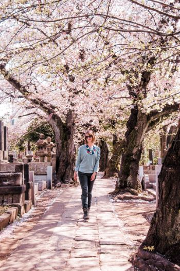 Tokyo Cherry blossoms in the Yanaka cemetery