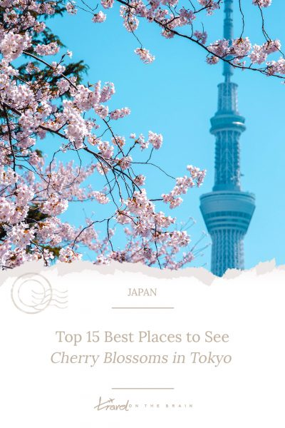 Top 15 Best Places to See Cherry Blossoms in Tokyo
