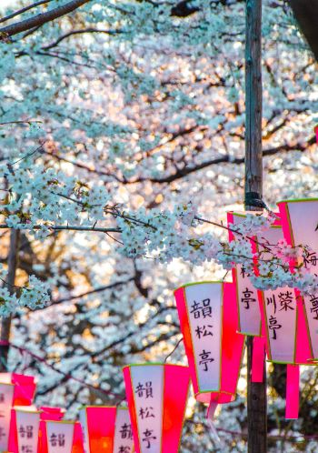 Ueno Park with sakura lanterns