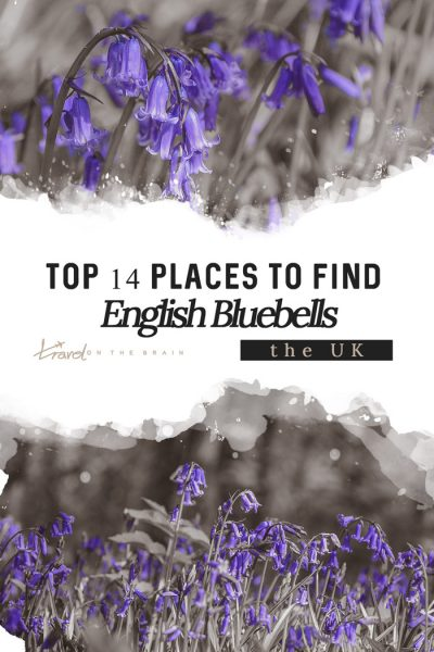 Top 14 Places to Find English Bluebells
