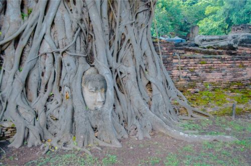Buddha in tree at Wat Maha That Ayutthaya Temple