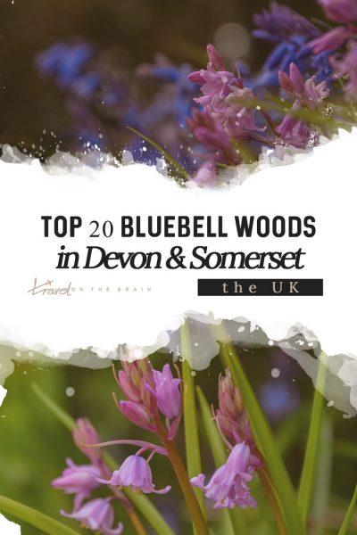Top 20 Walks for Bluebell Woods in Devon & Somerset