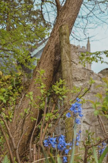 bluebells in Dartmoor National Park with church in background