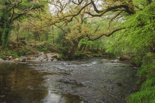 River Dart in Holne Wood, Devon, UK