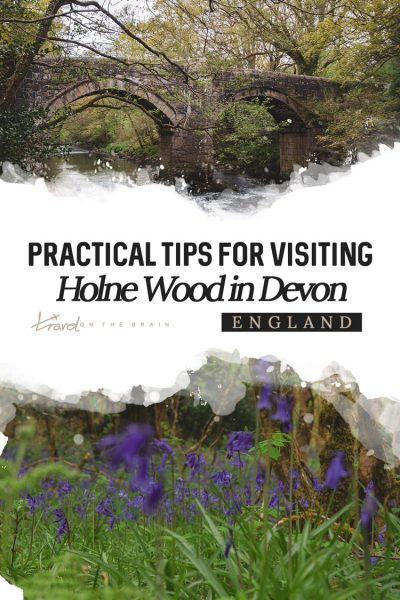 Practical Tips for Visiting Holne Wood during Bluebell Season