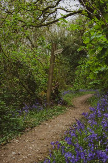 Proof that Wembury Woods in Devon Are Epic in Spring
