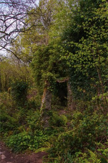 deserted stone house covered in ivy in Hembury Wood