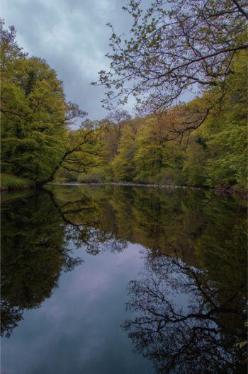 lake in Hembury Wood