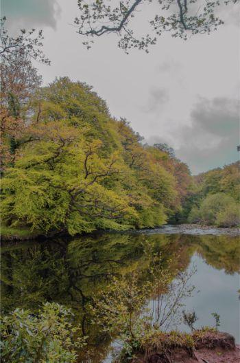 lake underneath cloudy sky in Hembury Wood