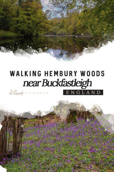 Walking Hembury Woods near Buckfastleigh