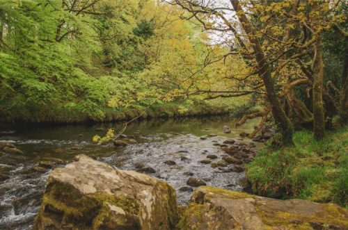 tranquil stream in Holne Wood