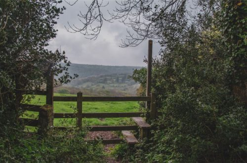 Publi Bridleway sign and gate from forest into cow meadow