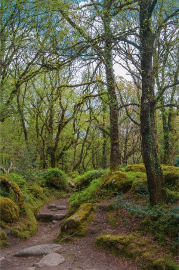moss covered trees near Becka Brook in Dartmoor NP
