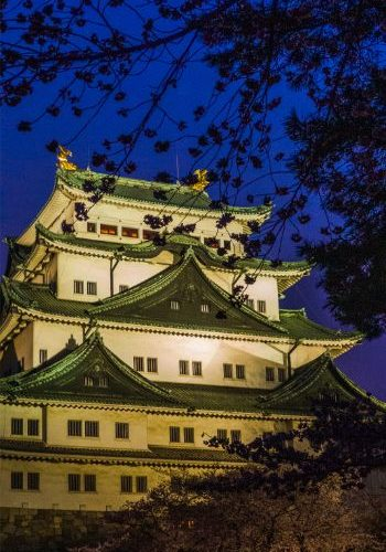 Nagoya Castle at night with cherry blossoms and illuminated