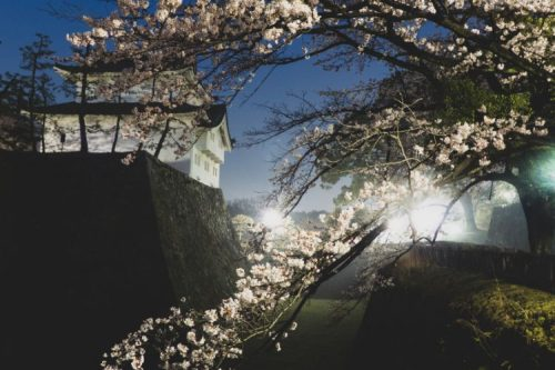 With cherry blossoms and illuminated at night: Nagoya Castle, Japan