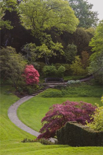 garden with Japanese maple trees in Dartington Hall, South Devon