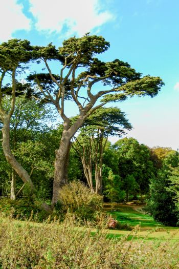 trees on the Isle of Wight