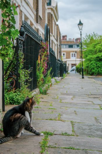 cat in front of town houses in Islington