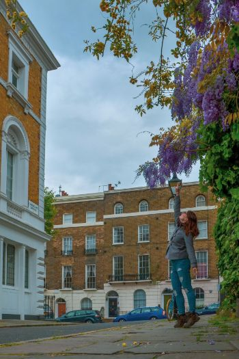 wisteria and woman in Islington, England