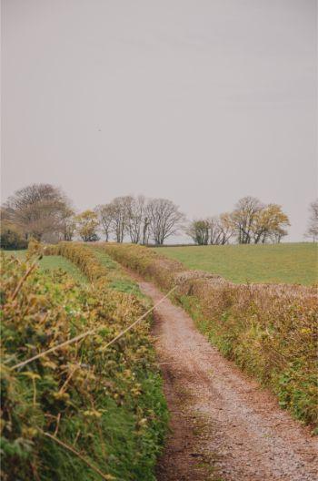 Totnes country walk